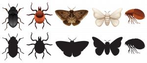 type of bugs